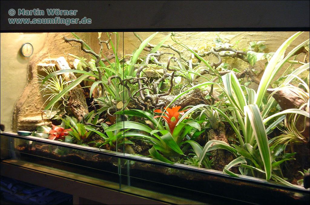 anolis terrarium
